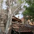 Húsz méter magas fa dőlt egy melléképületre